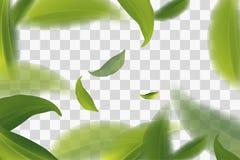 levendig vliegende groene theebladen, transparante Vectorillustratie als achtergrond royalty-vrije illustratie