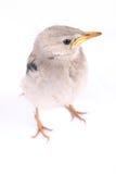 Levendig vogeltje Stock Fotografie