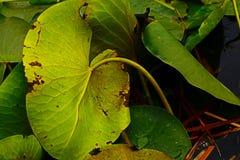 Levendige bladeren Stock Afbeelding