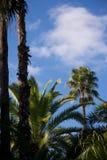 Levendige blauwe hemel en groene bomen in Marokko royalty-vrije stock foto's