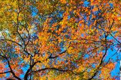 Levendige bomen met blauwe hemelachtergrond Royalty-vrije Stock Foto's