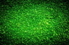 Levendige en donkere van het aard groene blad textuur als achtergrond Stock Fotografie