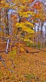 Levendige geel en sinaasappelen van dalingsbladeren stock foto's