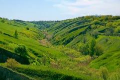 Levendige groene vallei Stock Foto