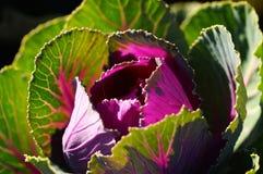 Levendige groente Stock Afbeeldingen