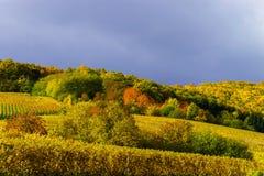 Levendige kleuren van de herfstwijngaarden in Andlau, de Elzas Royalty-vrije Stock Afbeeldingen