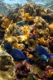 Levendige kleuren van koraalrif onder het overzees Royalty-vrije Stock Afbeelding
