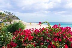 Levendige rode bloesem op struiken met turkoois oceaan en zandig strand op achtergrond stock foto's