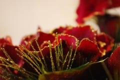 Levendige Rode en Gouden Bloesem stock foto's