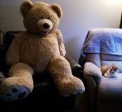 Levensgrote Teddy en kleine pot stock afbeelding