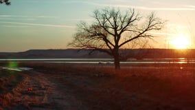 Levensstijl van de silhouet de Solitaire boom in gouden zonsondergang silhouet van een eenzame boom op mooie de zonsondergang van stock videobeelden