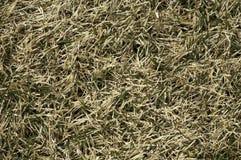 Levensteken in dood gras Stock Foto's