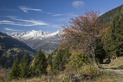 Leventina in autumn Royalty Free Stock Image