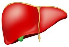 vergrote lever symptomen
