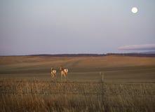 Lever de la lune au-dessus d'antilope Photo stock