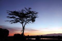 Lever de soleil à la garde d'Ol Pejeta Photo stock