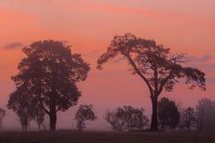 Lever de soleil africain Photographie stock libre de droits