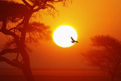 Lever de soleil africain - Namibie Image stock