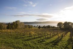 Lever de soleil au-dessus d'établissement vinicole Images libres de droits