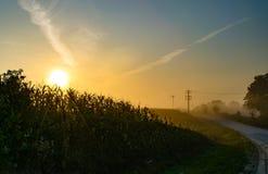 Lever de soleil au-dessus d'un champ de maïs de l'Iowa image libre de droits
