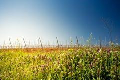 Lever de soleil au-dessus d'un vignoble Photographie stock libre de droits