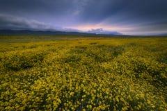 Lever de soleil au-dessus de gisement de fleur sauvage en plaine nanomètre de Carrizo Photo libre de droits