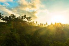 Lever de soleil au-dessus de jungle Image libre de droits