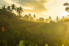 Lever de soleil au-dessus de jungle Photo libre de droits