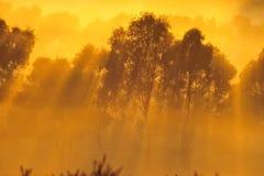 Lever de soleil au-dessus de l'arbre dans les nuages Photos stock