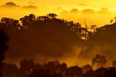 Lever de soleil au-dessus de l'arbre dans les nuages Image stock