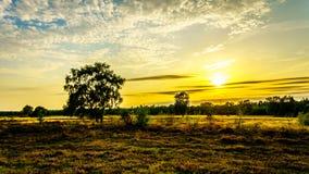 Lever de soleil au-dessus de l'Ermelose Heide avec des bruyères de Calluna en pleine floraison photo libre de droits