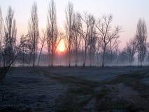 Lever de soleil au-dessus des arbres en parc dans des arbres de gelée dans la brume de matin Bancs de stationnement vides photos libres de droits