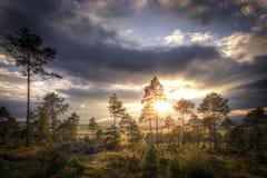 Lever de soleil au-dessus des arbres jaunes et rouges d'automne Images stock