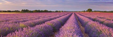Lever de soleil au-dessus des champs de lavande en Provence, France Image libre de droits