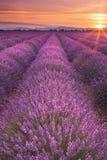 Lever de soleil au-dessus des champs de lavande en Provence, France Photographie stock libre de droits