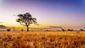 Lever de soleil au-dessus des champs de la savane et d'herbe en parc national central de Kruger images stock