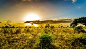 Lever de soleil au-dessus des champs de la savane et d'herbe en parc national central de Kruger photos libres de droits