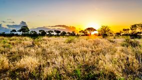 Lever de soleil au-dessus des champs de la savane et d'herbe en parc national central de Kruger photos stock
