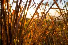 Lever de soleil au-dessus des collines Image libre de droits