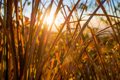 Lever de soleil au-dessus des collines Images libres de droits
