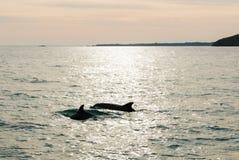 Lever de soleil au-dessus des dauphins en mer Images stock