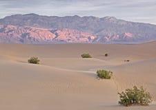 Lever de soleil au-dessus des dunes de sable plates de mesquite Image libre de droits