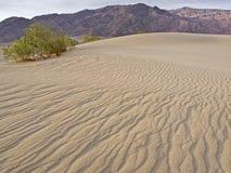 Lever de soleil au-dessus des dunes de sable plates de mesquite Photo libre de droits