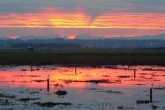 Lever de soleil au-dessus des gisements inondés de canneberge Photographie stock libre de droits