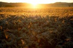 Lever de soleil au-dessus des zones de blé Photographie stock libre de droits