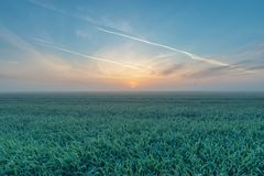 Lever de soleil au-dessus du champ de grain Photographie stock libre de droits