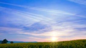 Lever de soleil au-dessus du gisement de graine de colza Laps de temps UHD banque de vidéos