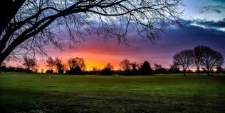 Lever de soleil au néon avec la silhouette des arbres Photo libre de droits