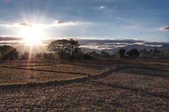 Lever de soleil aux gisements de riz avec le sol sec photo stock