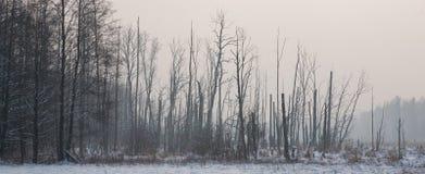 Lever de soleil avant horizontal avec la forêt ripicole photographie stock libre de droits